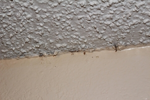 Popcorn Ceiling And Asbestos In Evergreen Co Evergreen
